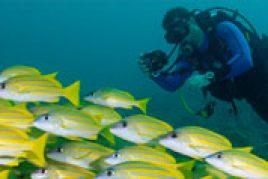 Unterwasser -Fotografie